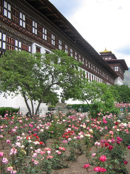 Flowers outside Tashichho Dzong