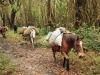 horses-on-trek